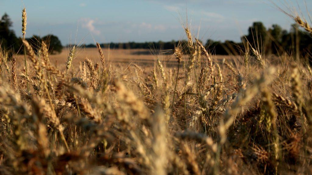 FIMA 2020: agricultura tecnológica - Todo lo necesario para el cultivo